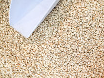 Coix seed Royalty Free Stock Image