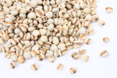 Coix seed Stock Photography