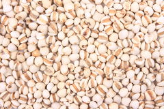 Coix seed Royalty Free Stock Photo