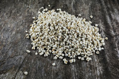 Coix seed Royalty Free Stock Images