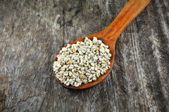 Coix seed wood spoon Stock Images