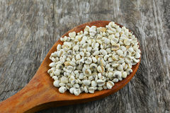Coix seed wood spoon Royalty Free Stock Images