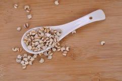 Coix-semi in un cucchiaio ceramico--una medicina di cinese tradizionale--una medicina di cinese tradizionale fotografie stock libere da diritti