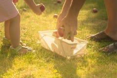 Coja la manzana en jardín Fotografía de archivo libre de regalías
