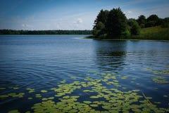 Cojines de lirio que crecen debajo del agua de la parte inferior del lago a la superficie del agua, hoja de los cojines de lirio  imagen de archivo libre de regalías