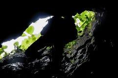 Cokro grotta Royaltyfri Foto