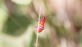 coléoptère Photo libre de droits