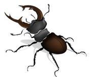 Coléoptère de klaxon de mâle illustration de vecteur