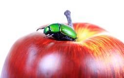 Coléoptère sur la pomme images libres de droits