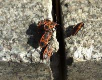 coléoptères Photo stock