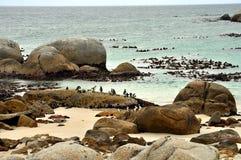 Colônia africana dos pinguins na praia dos pedregulhos imagem de stock royalty free