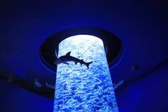 Colônia da sardinha do mar no oceano no parque temático imagem de stock