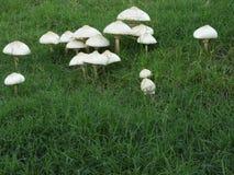 Colônia do cogumelo Imagens de Stock