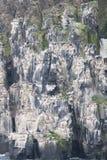 Colônia dos pinguins que escalam à parte superior do ártico da montanha fotografia de stock royalty free
