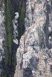 Colônia dos pinguins que escalam à parte superior do ártico da montanha imagem de stock royalty free
