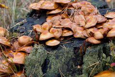 Colônia fungosa Imagens de Stock