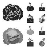 Col, calabaza, cebolla, buriak Iconos determinados de la colección de la planta en el ejemplo negro, monocromático de la acción d ilustración del vector