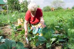 Col del weeding de la abuela Imágenes de archivo libres de regalías