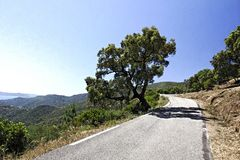 Col du Canadel, Maures Massif at the French Riviera, Southern France Stock Photo