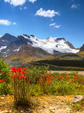 Colômbia Icefield Mt Geleira de Athabasca Fotografia de Stock