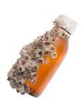 Colônia da bolota do mar em uma garrafa Foto de Stock