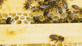 Col?nia das abelhas que trabalham em uma colmeia filme