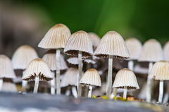 Colônia do cogumelo Imagem de Stock Royalty Free