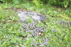 Colônia do cogumelo Imagem de Stock
