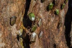 Colônia do inseto foto de stock
