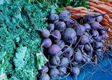 Col rizada de las zanahorias de las remolachas Imagen de archivo libre de regalías