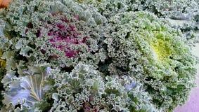 Col rizada floreciente Foto de archivo