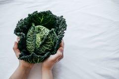 Col rizada verde fresca la mayoría de las verduras útiles en manos de la mujer en blanco Foto de archivo
