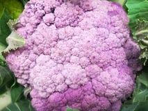 Col rosada, verdura, aún vida del ingrediente de la cocina Foto de archivo