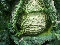 Col, verdura, aún vida del ingrediente de la cocina Foto de archivo libre de regalías