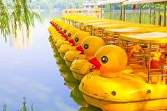 Cola amarilla del pato Fotos de archivo