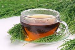 Cola de caballo de campo del té foto de archivo libre de regalías