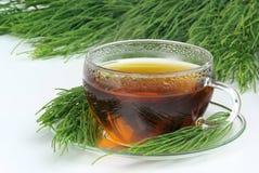 Cola de caballo de campo del té imagen de archivo libre de regalías