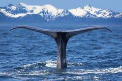 Cola de la ballena foto de archivo libre de regalías