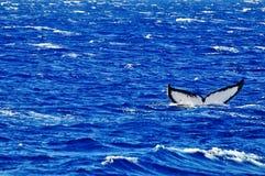 Cola de la ballena imagen de archivo libre de regalías