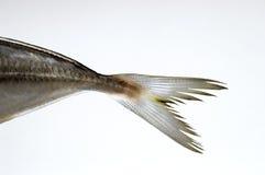 Cola de los pescados Imagen de archivo