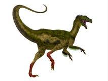 Cola del dinosaurio de Ornitholestes