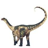 Cola del dinosaurio del Antarctosaurus Imágenes de archivo libres de regalías