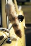 Cola del Fox en el coche del vintage Fotos de archivo libres de regalías