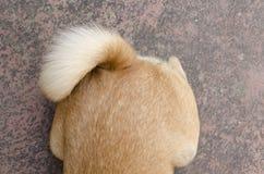 Cola del perro Imagen de archivo libre de regalías