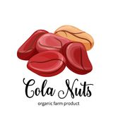 Cola nuts in cartoon style. Vector cola nuts in cartoon style for template label, packaging snack and emblem farmer market design stock illustration