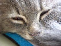 Cola ocultada de mentira el dormir mullido gris del gato fotos de archivo