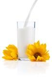 Colada de un vidrio fresco de leche y de flores amarillas Fotos de archivo