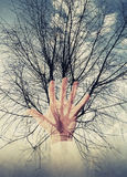 Colagem, árvore e mão abstratas da foto do conceito do ambiente Foto de Stock Royalty Free