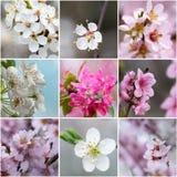 Colagem com flores da mola Imagens de Stock Royalty Free