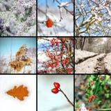 Colagem com imagens do inverno Imagens de Stock